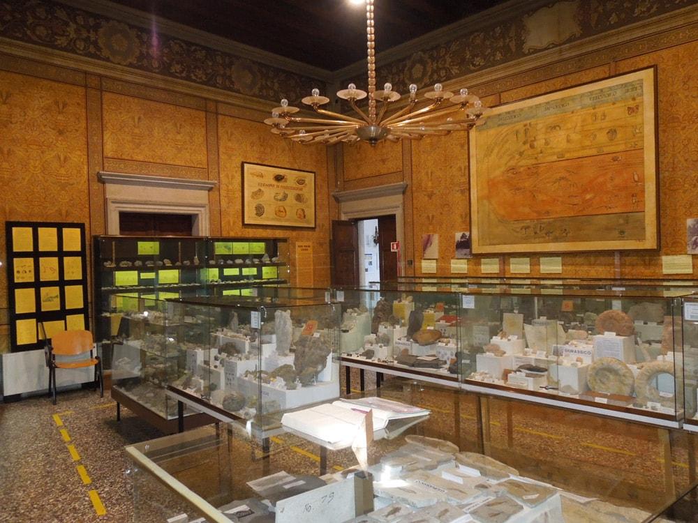 Museo Paleontologico Michele Gortani